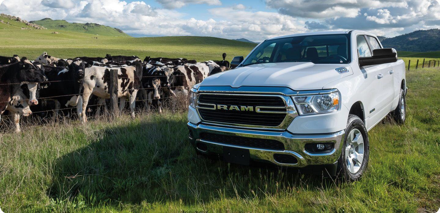 Mostrar Una Ram 1500 2021 blanca estacionada en un campo frente a una cerca de alambre de púas que la separa de un rebaño de vacas.