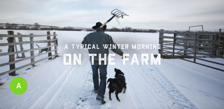Vida Ram - Una típica mañana de invierno en la granja